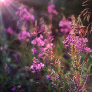 Цветы после обработки