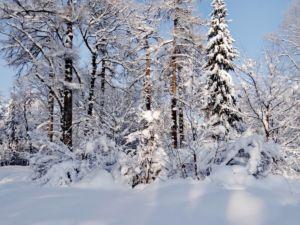 E.Vasileva V zimnei skazke