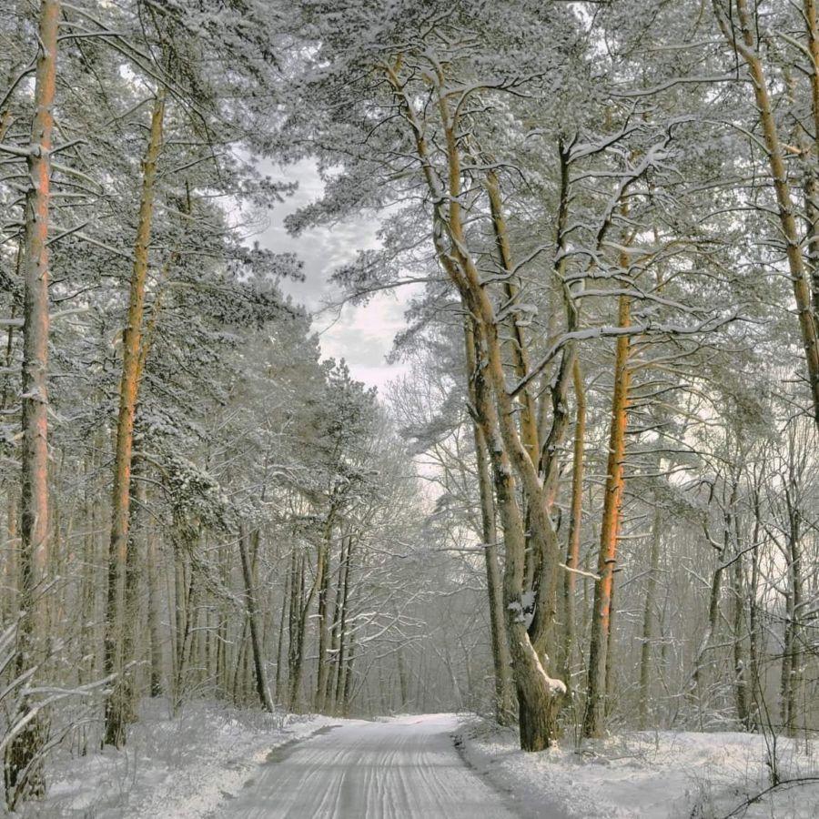 M.Novikov Dorogami zimnego lesa