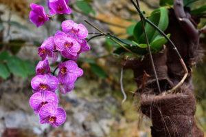 Orhidei