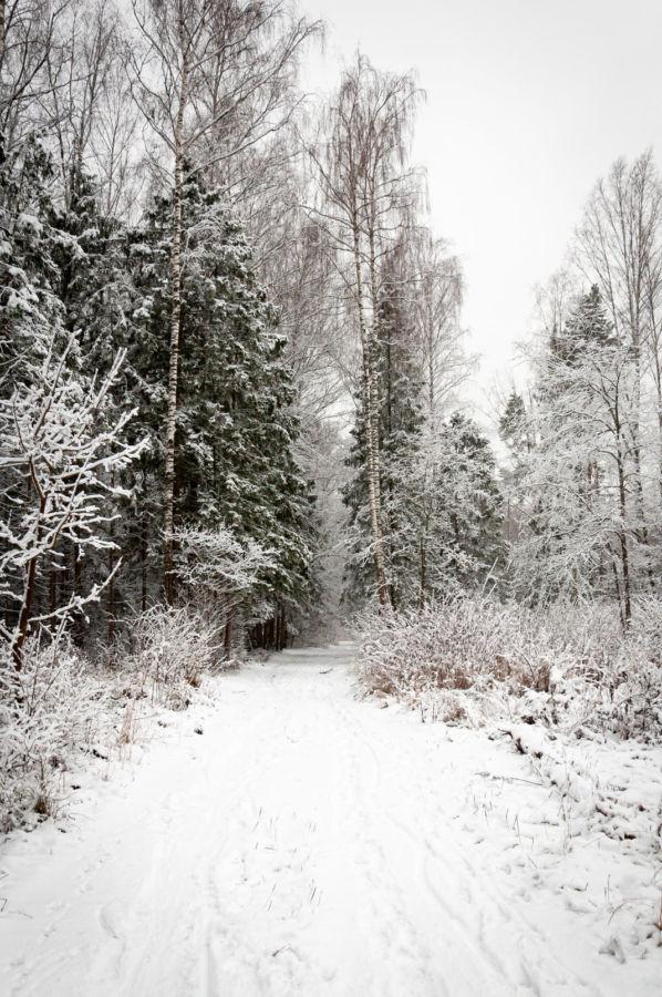 D.Karasev Po zimnei dorozhke