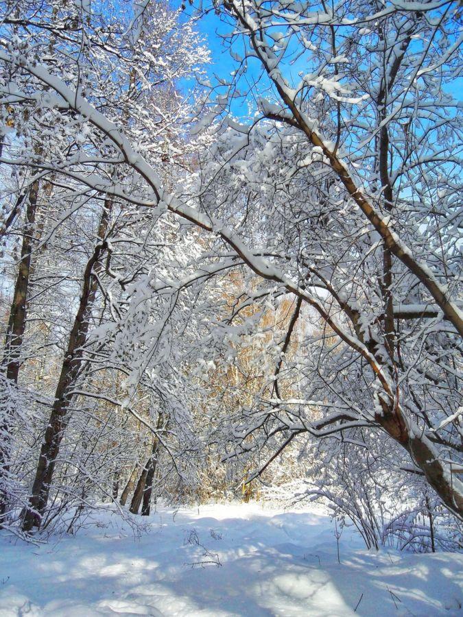 L.Sergeeva Posle snegopada