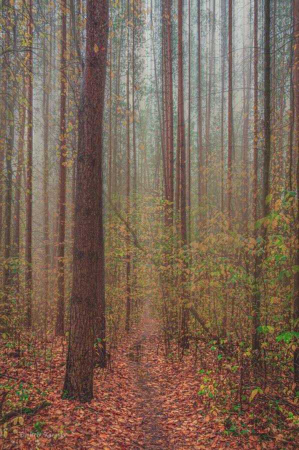 D.Karasev Tropinka v lesu