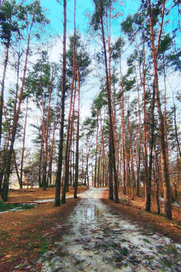 L.Belyaeva Litva. Mart